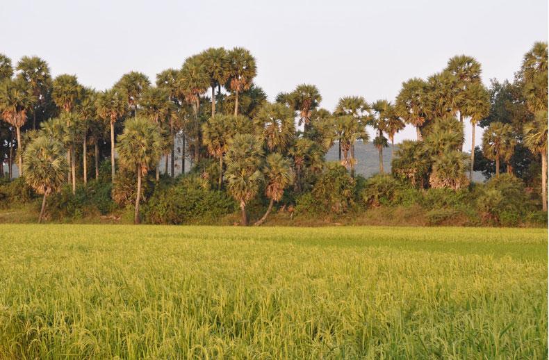 diapo-inde-sud-paysage