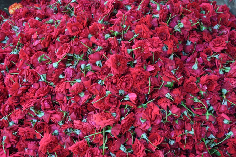 S'enivrer de couleurs au marché aux fleurs