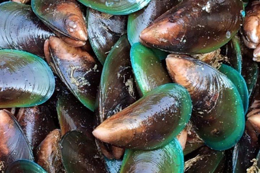 Marché de poissons de Kochi